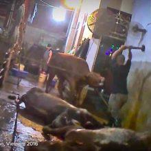 Προσοχή!! Πολύ σκληρές εικόνες από θανάτωση ζώων