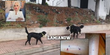 Νέα επίθεση αδέσποτου σκύλου